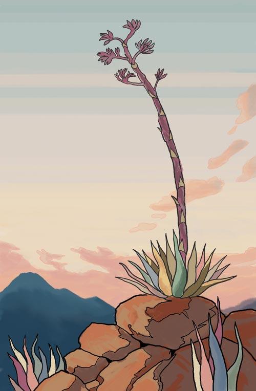 agave01_finish01_web