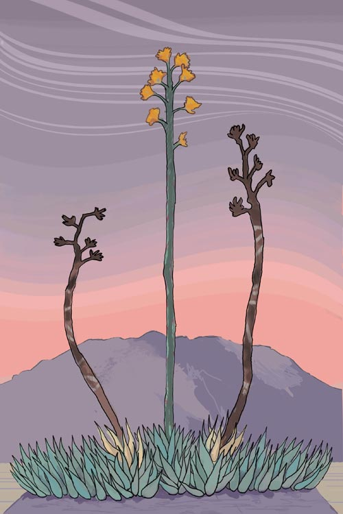 agave03_006_web
