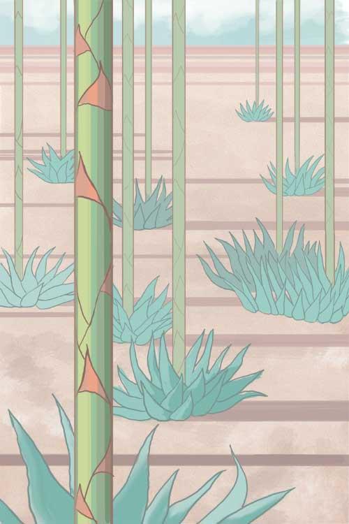 agave10_005_web